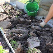 Перекопайте участок земли на штык лопаты и удалить дерновый слой