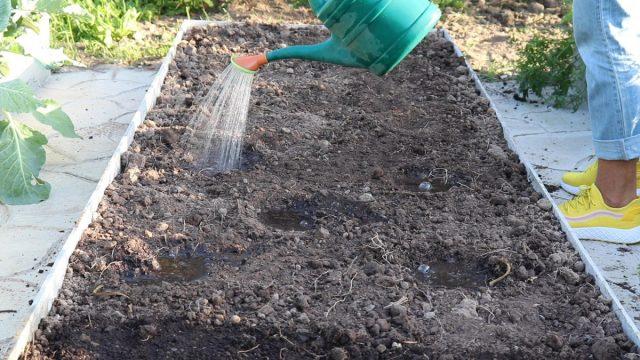 Способ № 2 – посев в лунки