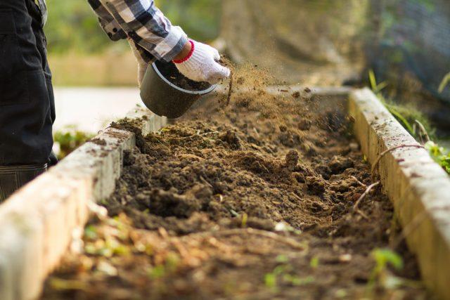 Компост уместнее использовать ранней весной и как мульчу, чем для вытяжек и сезонных подкормок