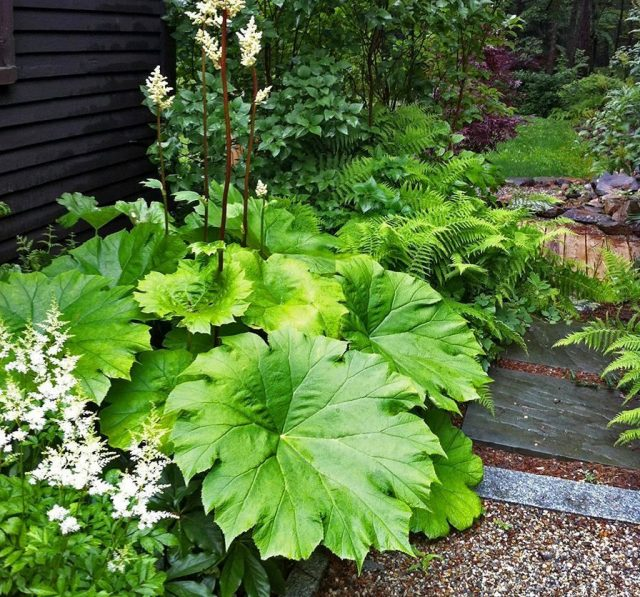 Лучшим выбором для цветников на боковом дворе станут растения, которые хорошо себя чувствуют в условиях низкой освещенности