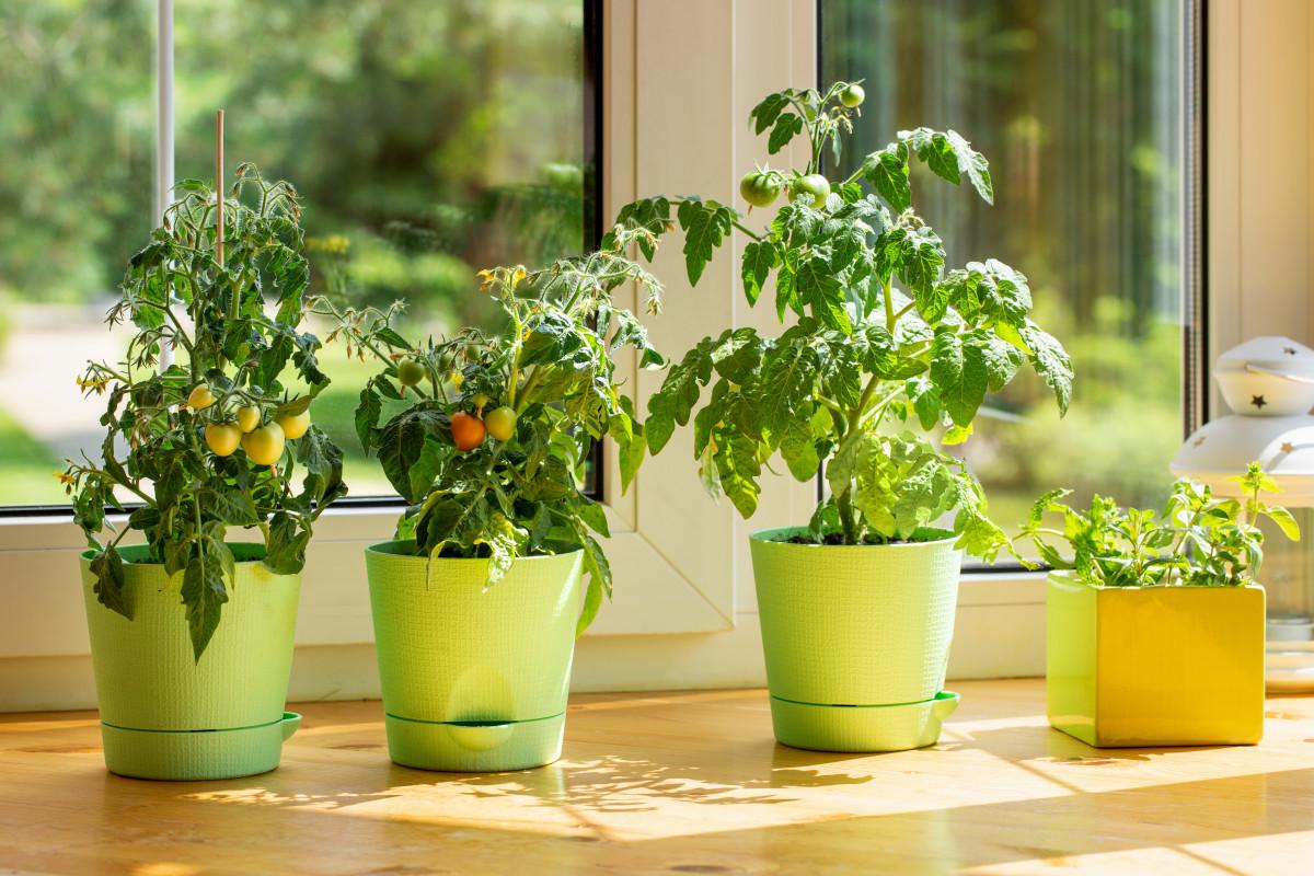 Домашний огород без грязи и неприятного запаха