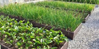 Эстетика огорода — как сделать огород привлекательным