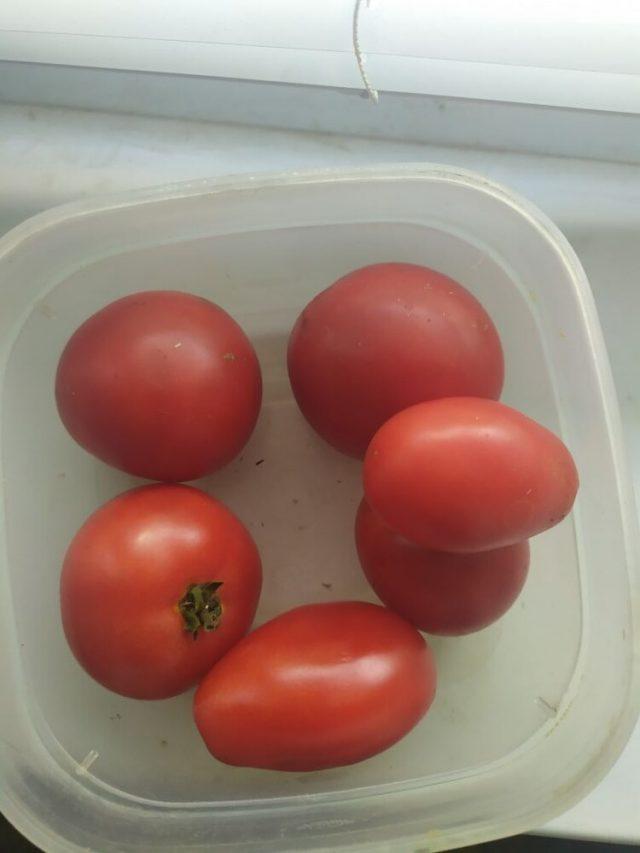 Комнатные помидорки стали зеленым и вкусным чудом среди овощей