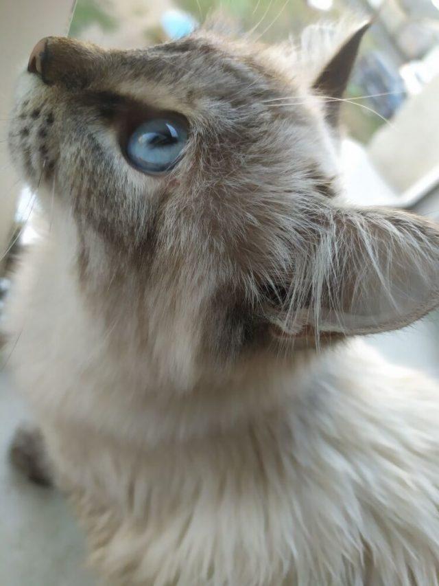 Кошка Муня