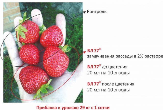 Обработка клубники «ВЛ 77»