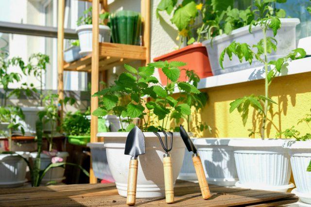 Свой мини-огород на балконе принесет много радости и витаминов