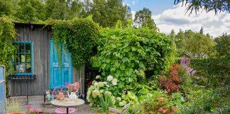Сад непрерывного цветения в средней полосе России