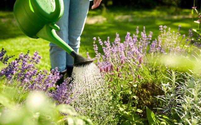El riego oportuno es la clave para la salud de las plantas