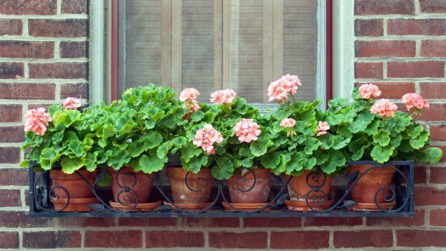 Flores fuera de la ventana del apartamento