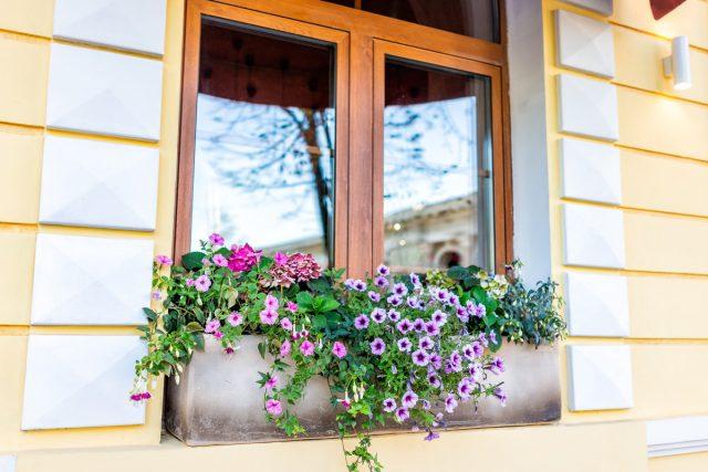 El cuidado adecuado garantizará la salud y las propiedades decorativas de las plantas.