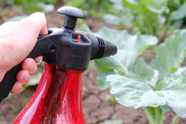 Народные средства борьбы против капустной блошки довольно эффективны