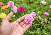 Лучшие декоративные растения для солончаков