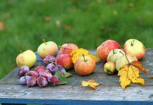 Лунный календарь садовода и огородника на сентябрь 2021