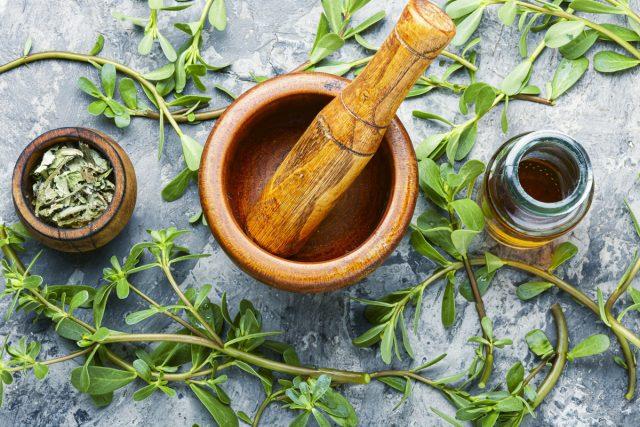 Портулак — одно из самых эффективных природных лекарств