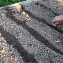 Сделайте борозды для посева. Хорошо пролейте борозды, а затем высадите семена.