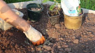 Haz un agujero de aterrizaje en el suelo.  Coloque una capa de drenaje en el fondo del pozo.  Espolvorea un poco de arena encima.