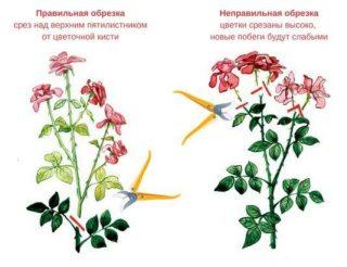 Правильная обрезка цветов