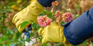 Подготовка роз к зиме — учитываем все тонкости