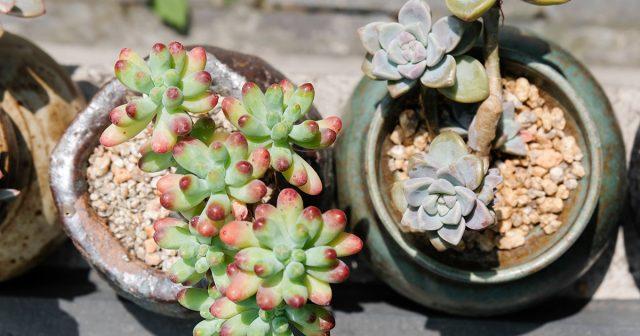 Цеолит в горшках с растениями