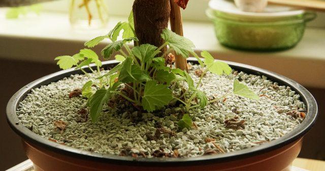 Природный цеолит может также украсить горшки с растениями