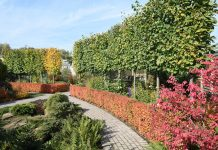 Яркие краски осени
