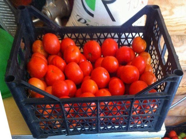 Под кусты прижившихся помидор щедро вносим компост