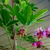 Мелкие и в кистях — мужские цветки
