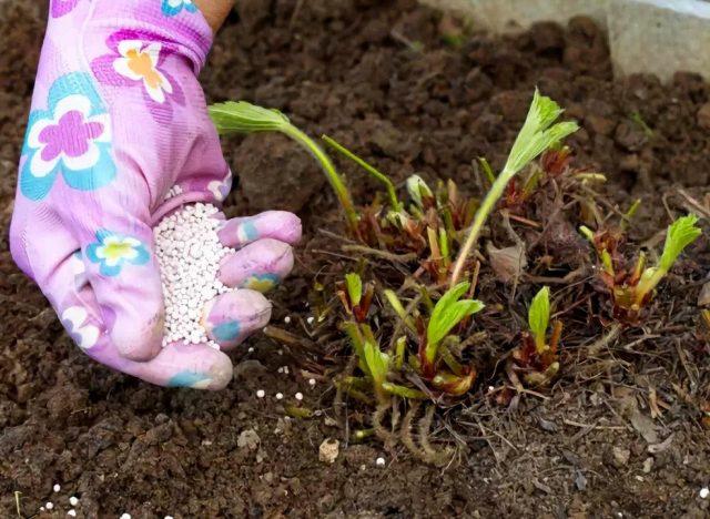 Осенью удобрения используют в сухой, а не в жидкой форме
