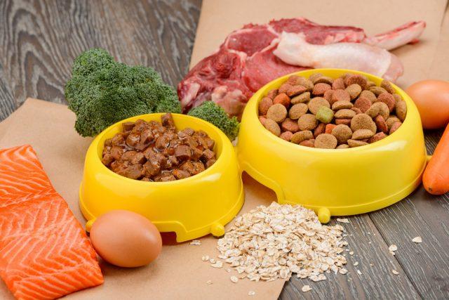 Сухой корм или натуралка — чем лучше кормить собак?