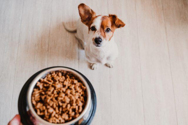Выбирайте сухой корм по совету заводчика или ветеринара