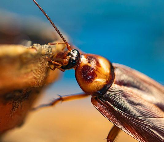 Как вывести тараканов в квартире — проверенный метод