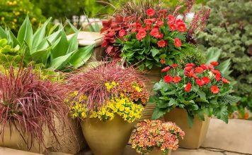 Контейнерные растения зимой
