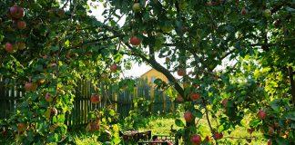 Создаём сад «под себя» — какие плодовые, сколько и где приобретать?
